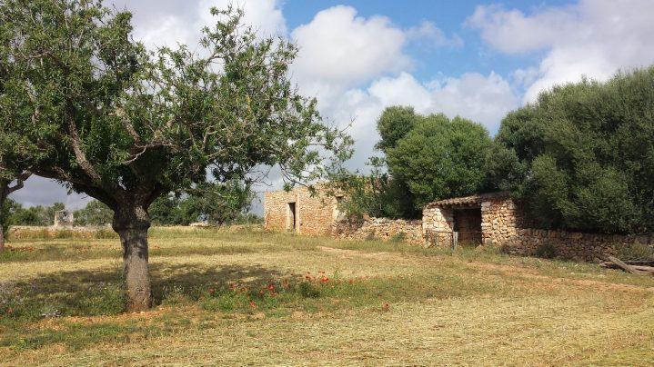 Steinhäuser auf Feldern auf Mallorca