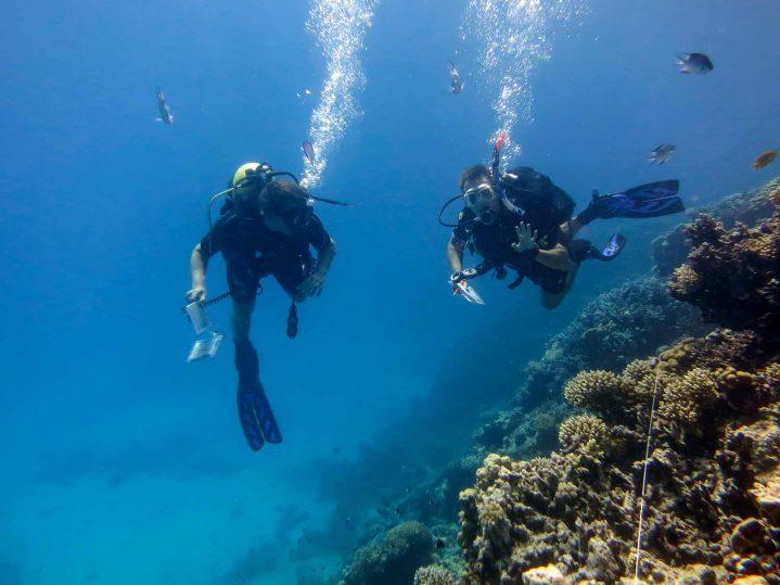 Taucher beim Riff-Check im Roten Meer