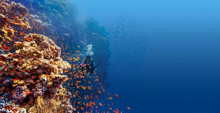 Taucher unter Wasser am Riff