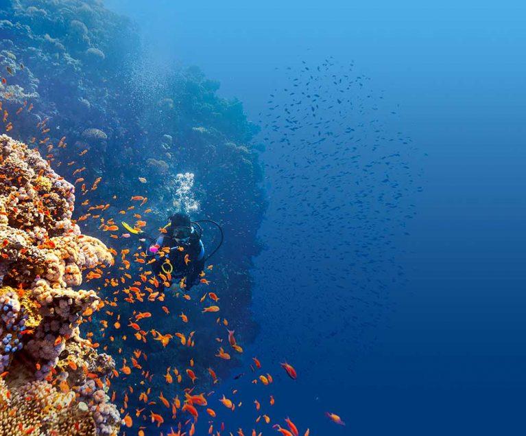 Die Riffe im Roten Meer am ROBINSON CLUB SOMA BAY werden regelmäßig gecheckt.