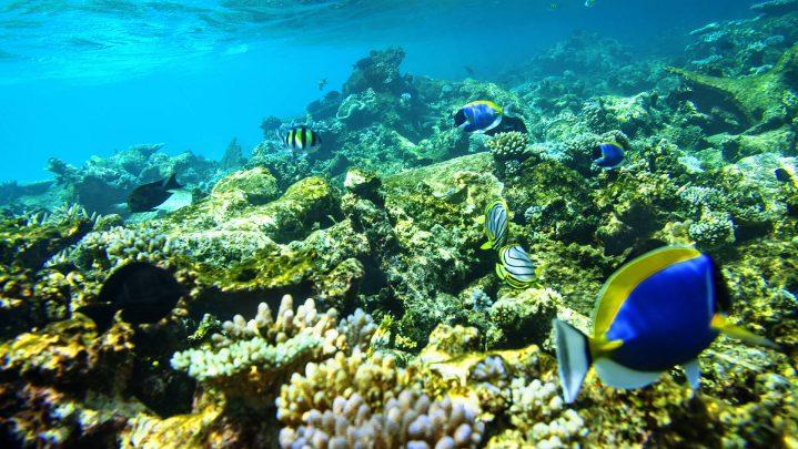 Korallenriff vom ROBINSON Club Maldives