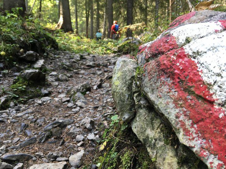 Rot-weiß-markierter Stein im Wald