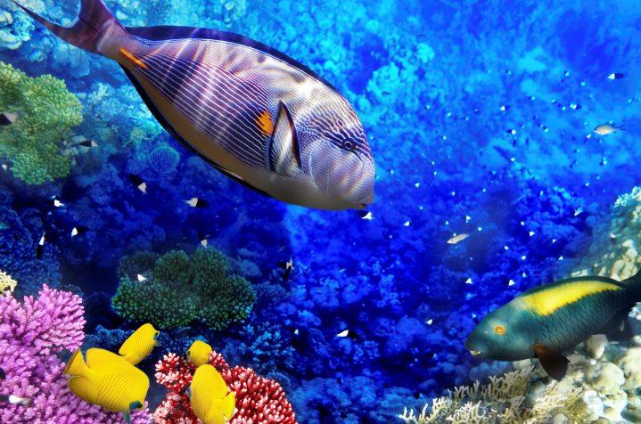 Bunte Unterwasserwelt im Roten Meer Hurghada