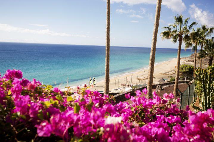 Blumen und Palmen an der Strandpromenade auf Fuerteventura