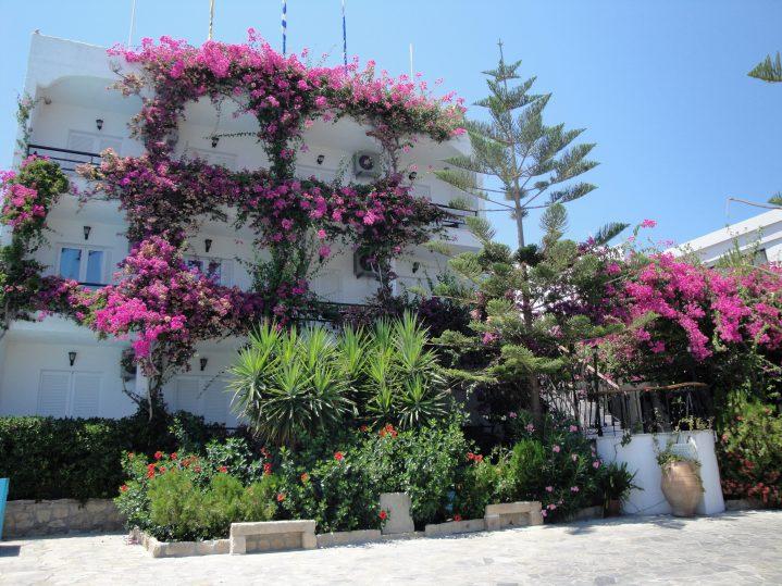 Flora und Blütenpracht auf der griechischen Insel Kos