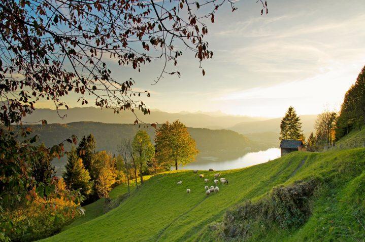 Blick auf eine Wiese mit Schaafen und im Hintergrund der Ossiacher See bei Sonnenaufgang, Kärnten, Österreich