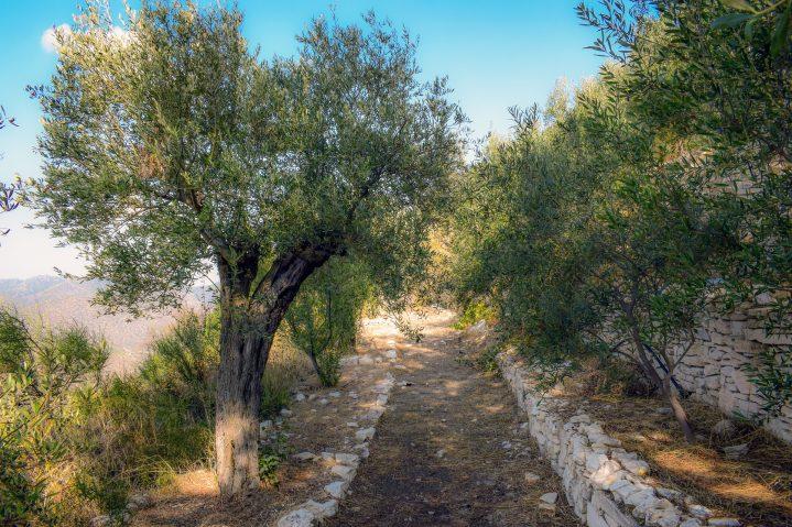 Outdoor-Aktivitäten auf Zypern Montainbiketour durch Olivenhaine