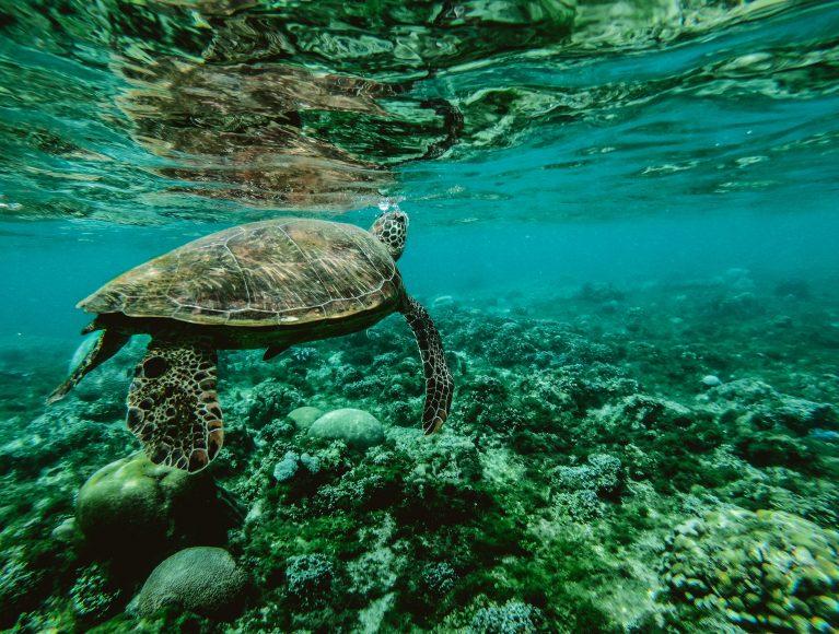 Die Unterwasserwelt der Malediven