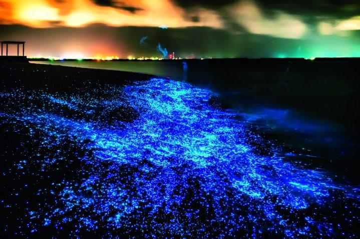 Biolumineszenz des Phytoplanktons Malediven